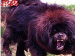 36体育-扎卡里-斗牛直播间_36体育-扎卡里-斗牛视频全集 - China直播视频